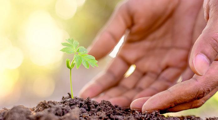 Jak wybrać ziemię do ogrodu?