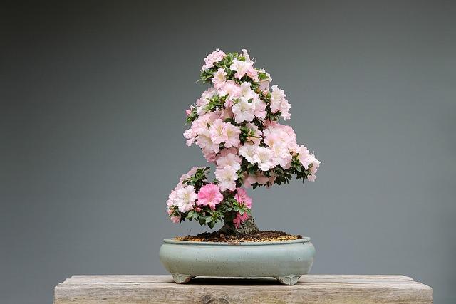 doniczki do bonsai