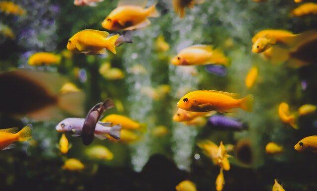 Wyposażenie akwarium
